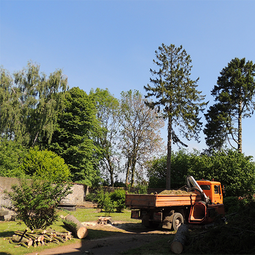 Abattage démontage arbre Mons