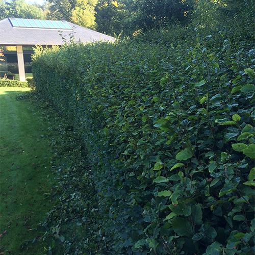 Entretien des espaces verts en Brabant Wallon